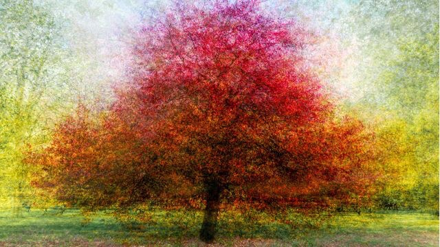 A short read and some great in the round images: Painting-like photograph by Lynne Blount from Saffron Walden | Saffron Walden Reporter